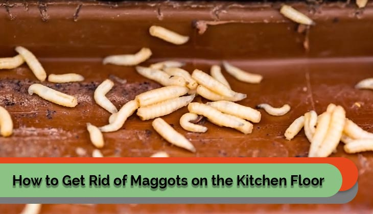 How to Get Rid of Maggots on the Kitchen Floor